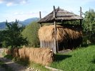 Drying the hay in Borsa